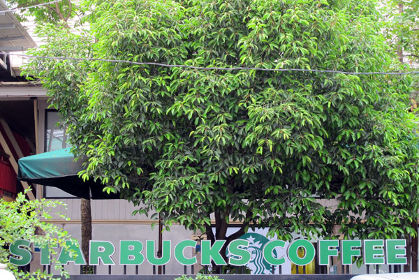 Starbucks (Nimmanhemin)