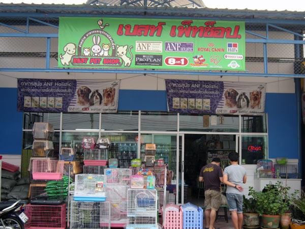 Best Pet Shop @Kamthieng Flower Market