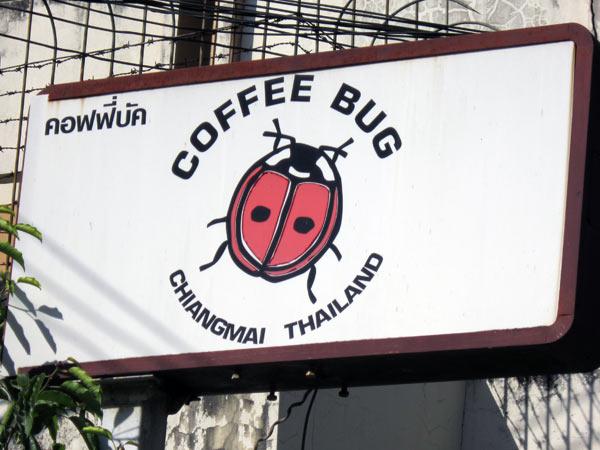 Coffee Bug