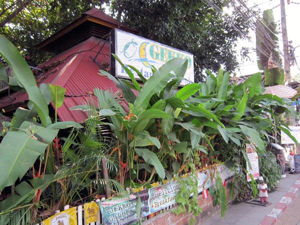 Gekko Garden
