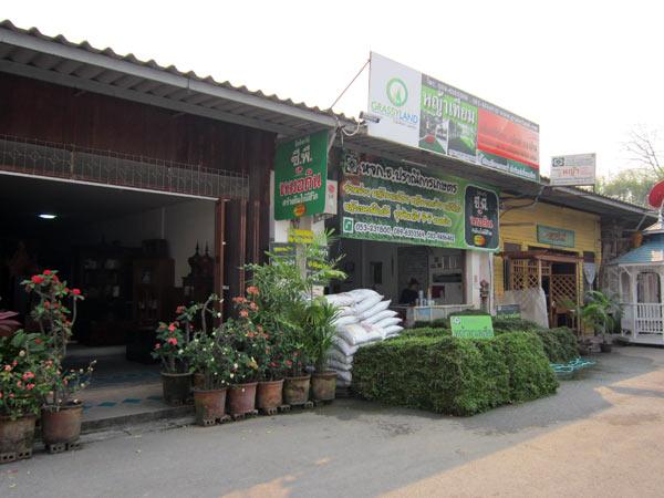 Grassy Land @Kamthieng Flower Market