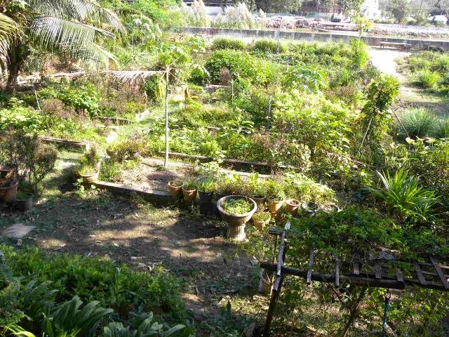 Happy Green Vegan & Vegetarian Chiang Mai