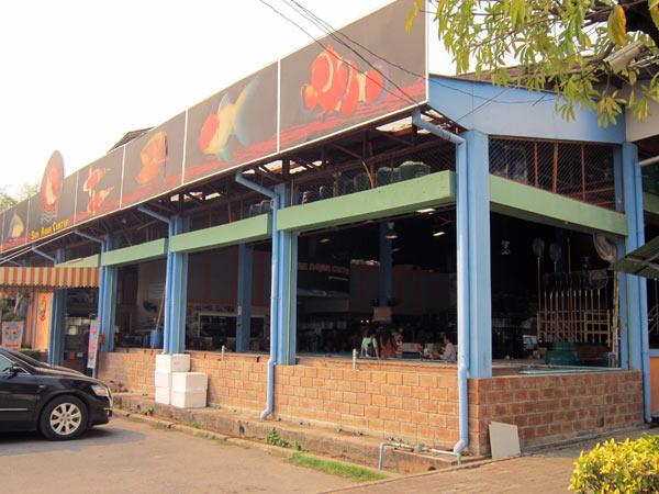 Sun Aqua Center @Kamthieng Flower Market
