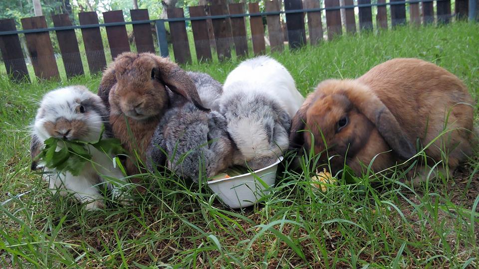 The Rabbit Union