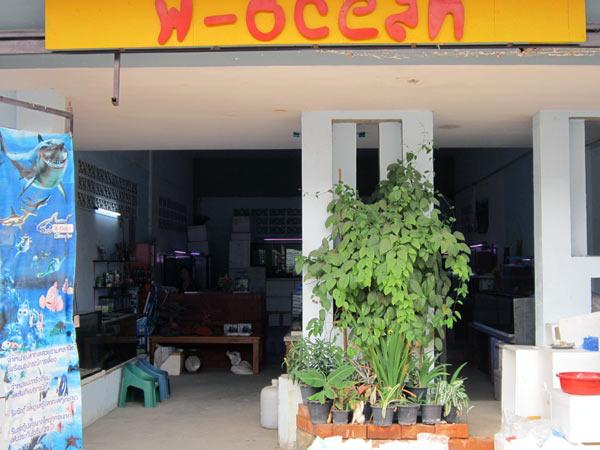 W-Ocean @Kamthieng Flower Market