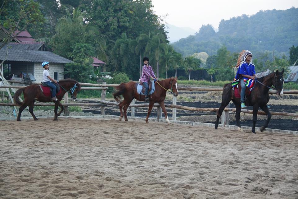 Pong Horse Park